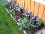 Astrar Framför altanen visar jag upp mina vackra Astrar: Alma Pötschke, Jenny, Early Blue. Mellan dessa har jag planterat Trädgårdsnejlika. Framför dessa ytterligare en rad med blandade Astar från Bakker. Du ser även Blodnäva i förgrunden. 2006-10-14 Bild 020