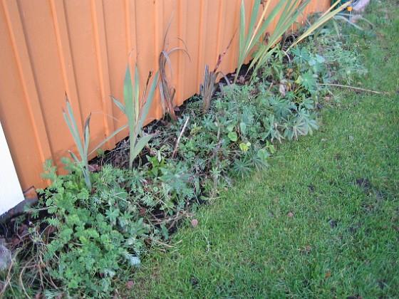 Som sagt, frörabatterna är inte så vackra längre. 2006-11-26 Bild 023 Granudden Färjestaden Öland
