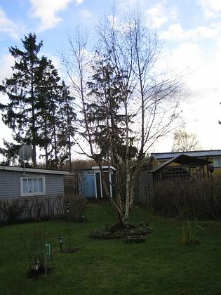 Björken. 2006-11-26 Bild 025 Granudden Färjestaden Öland