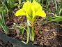 Iris  2007-03-17 Bild 021