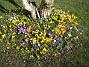 Krokus  2007-03-17 Bild 031