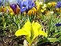 Iris  2007-03-17 Bild 038