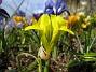 Iris  2007-03-17 Bild 039