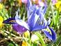 Iris  2007-03-17 Bild 051