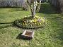 Krokus  2007-03-17 Bild 082