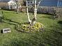 Krokus  2007-03-17 Bild 083