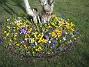 Krokus  2007-03-17 Bild 085