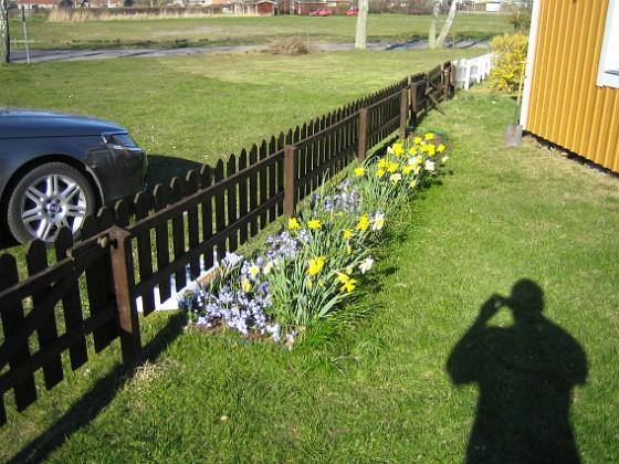 Påskliljor och Vårstjärna &nbsp 2007-04-14 Bild 077 Granudden Färjestaden Öland