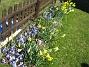 Påskliljor och Vårstjärna  2007-04-14 Bild 025
