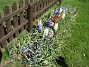 Hyacinter  2007-04-21 Bild 008