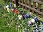 Hyacinter  2007-04-21 Bild 013