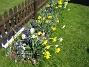 Påskliljor och Hyacinter  2007-04-21 Bild 014