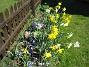 Påskliljor och Hyacinter  2007-04-21 Bild 018