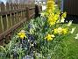 Påskliljor och Hyacinter  2007-04-21 Bild 019