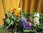 Liljeblommiga Tulpaner och Hyacinter  2007-05-05 Bild 036
