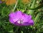 Blodnäva  2007-05-27 Bild 040