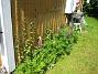 Lupiner  2007-05-27 Bild 053