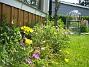 Allium och Blodnäva  2007-06-10 Bild 009