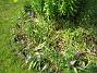 Bild 040  2007-06-10 Bild 040