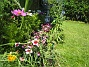 Rosenskära och Nejlikor  2007-06-20 Bild 039
