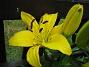Lijor  2007-06-24 Bild 005