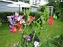 Luktärt  2007-07-09 Bild 032