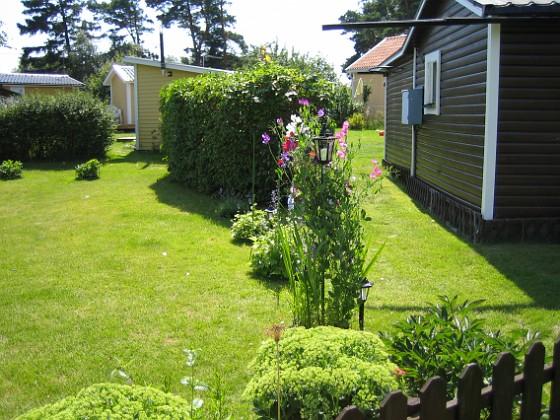 Luktärt &nbsp 2007-07-18 Bild 033 Granudden Färjestaden Öland