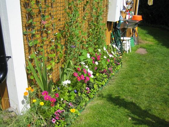 Rosenskära  2007-07-29 Bild 016 Granudden Färjestaden Öland