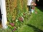 Rosenskära  2007-07-29 Bild 016