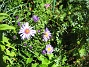 Astrar  2007-08-07 Bild 007