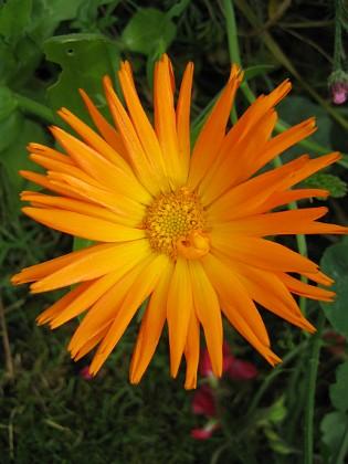 Denna vackra blomma vet jag inget om. 2007-10-07 Bild 062 Granudden Färjestaden Öland