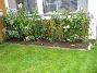 Höstflox Vinkel. Mina Höstflox har snart blommat färdigt. 2007-10-07 Bild 016