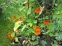 Krasse Krasse. 2007-10-07 Bild 032