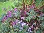 Astrar Astrar vid björken. 2007-10-07 Bild 044