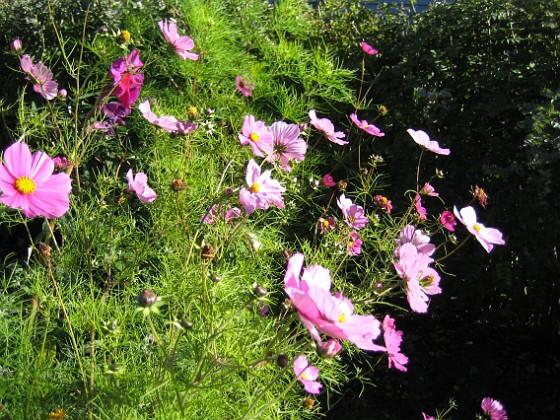 Rosenskära Rosenskära 2007-10-08 Bild 027 Granudden Färjestaden Öland