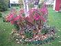 Luktaster Dessa Luktastrar 'Alma Pötschke' blir verkligen vackra. 2007-10-28 Bild 003