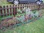 Staket, Vänster. Astrarna i mitten (Apollo samt Victoria) verkar inte hinna blomma i år. (2007-10-28 Bild 009)