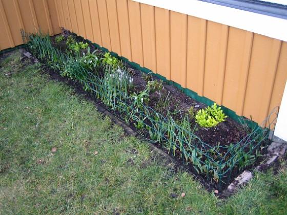 Här i vinkeln har jag satt ett litet staket som stöd för mina tulpaner. 2008-03-01 Bild 063 Granudden Färjestaden Öland