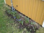 Norra gaveln. Runt min antennmast ser vi lite Iris. (2008-03-01 Bild 012)