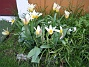 Näckrostulpan  2008-04-12 Bild 034