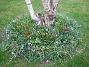 Bild 039  2008-04-12 Bild 039