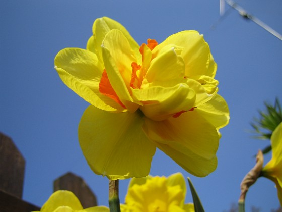 Narciss {  }