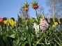 (2008-04-26 Bild 024)