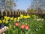 Påskliljor  2008-04-26 Bild 054