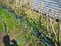 Scilla  2008-04-26 Bild 104