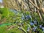 Scilla  2008-04-26 Bild 105