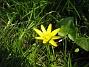 Bild 126  2008-04-26 Bild 126
