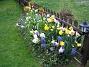 Hyacinter  2008-05-01 Bild 011