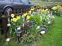 Hyacinter  2008-05-01 Bild 012