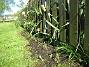 Bild 002 På utsidan har jag satt bl a Regnbågslupin. 2008-05-08 Bild 002